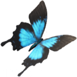 amb coform logo site 512x512 150x150 - À propos